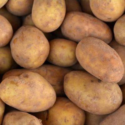 odmiana ziemniaka kennebec