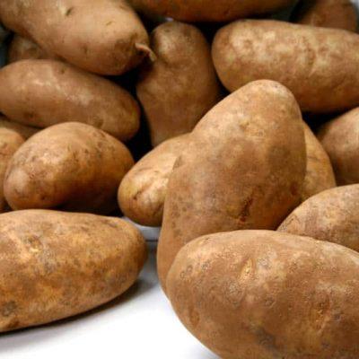 odmiana ziemniaka russet